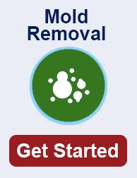 mold remediation in Local TN